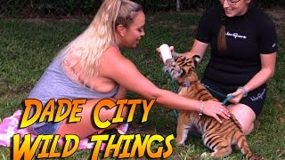 Swimming w/ Bindi the Baby Tiger at Dade City Wild Things Zoo! I also played with a Gibbon!