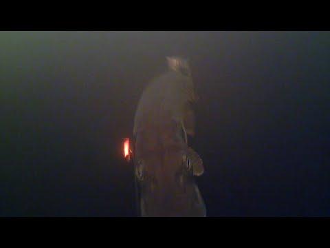Loch Garry Fishing Water Wolf Footage