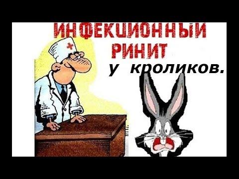 Ринит у кроликов(симптомы и причины).