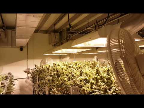200 thousand square foot growing facility in Denver