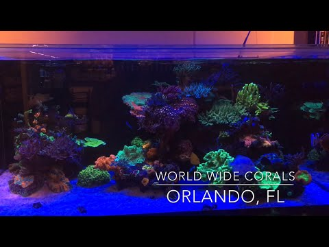 World Wide Corals - Awesome Reef Tank Displays & Coral Farm!!