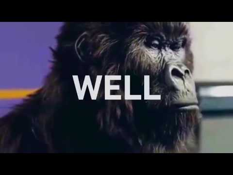 Bitcoin Investment Gorilla HODL On