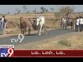Horse Race conducted in Chikodi Taluk
