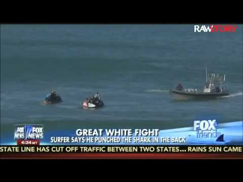 Brian Kilmeade: We should be 'clearing the water' of sharks