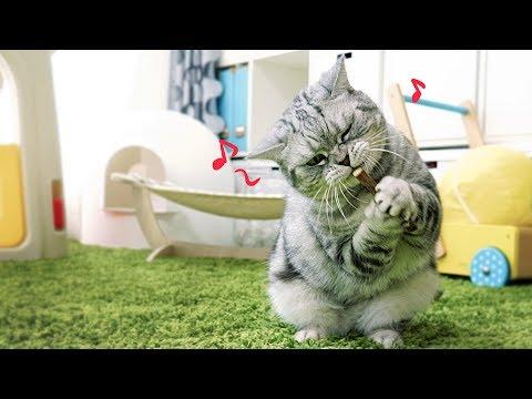 고양이가 좋아하는 나무막대기가 있다?!
