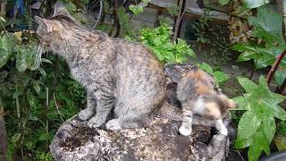 Трехцветные кошки приносят счастье :)