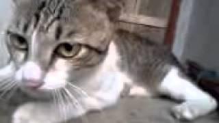 video kucing lucu lagi cegukan