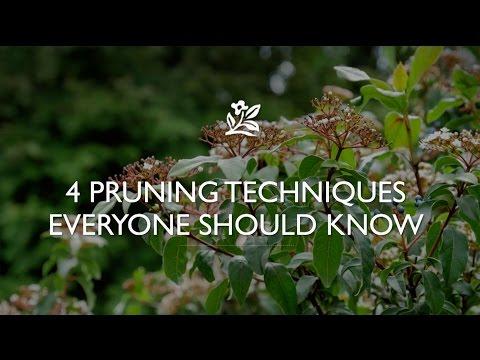 Pruning Techniques   Monrovia Garden