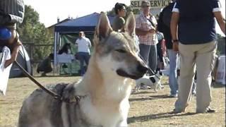 Agility Dog. (royal Canin).
