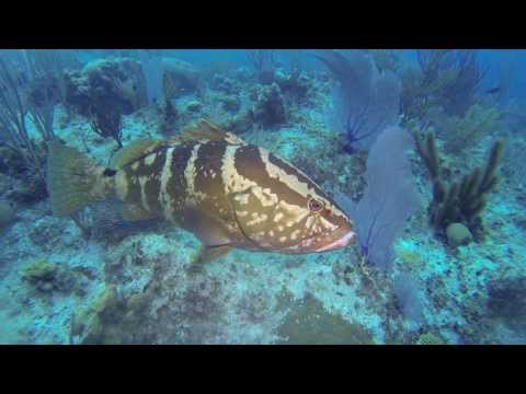 Aquatic Life in the Cayman Islands