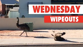 wednesday-wipeouts