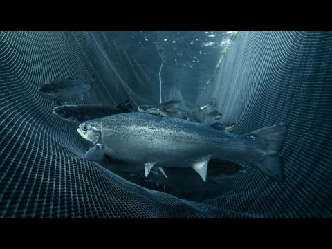 Norway's fishing industry fights back after salmon scare