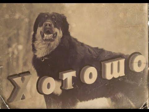 Волкодав-Бурят-монгольский (Хотошо)