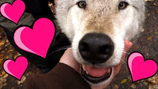 Kissed By A Wolf! - Oct 7th, 2015