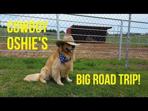 OSHIE'S BIG ROAD TRIP COMPILATION! | Oshies World