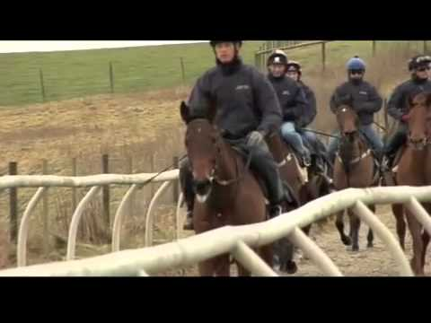 Horses First Racing - Stable Tour