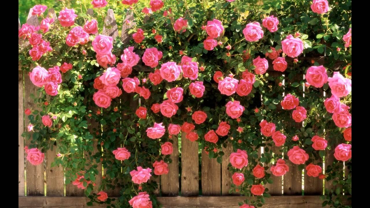 Красивые цветы и