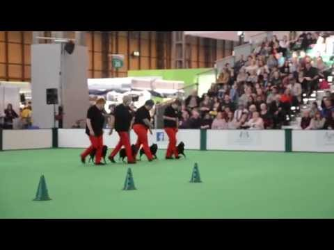 Team Schipperke Crufts Obreedieence 2015