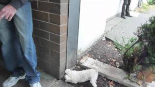 Lucky, The 3 Legged Dog Digging In The Dirt.mp4