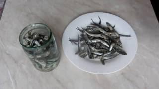 Как засолить и замариновать рыбу ХАМСУ