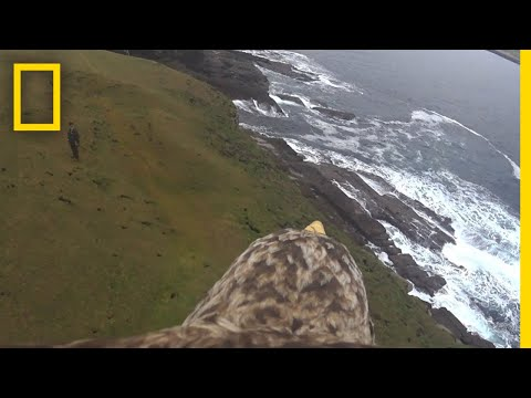 See What It's Like to Fly on the Back of an Eagle | National
