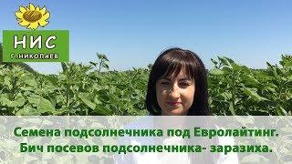 Семена подсолнечника под Евролайтинг. Бич посевов подсолнечника- заразиха.(, 2017-11-11T12:43:19.000Z)