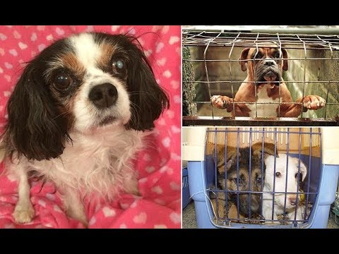 Lucy's Law to combat the c ruelty of puppy farms