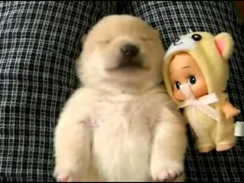 Cachorrito que habla dormido...