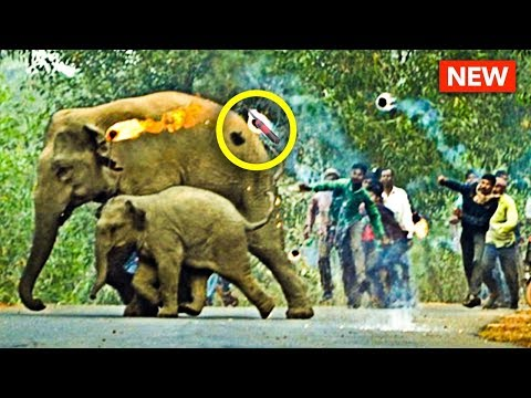 Poor Elephants... Get BOMBS Thrown at Them...