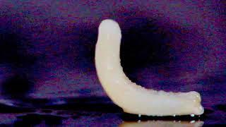 """Копия видео """"Огуречный цепень. Кошачий глист-паразит. Cucumber Tenderness -Cat's worm-parasite."""""""