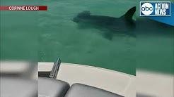 Boaters spot Hammerhead shark off Anna Maria Island