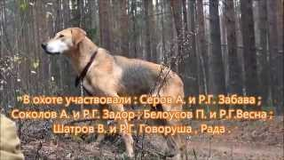 Охота с русскими гончими на зайца 2015г.