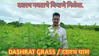 Dashrat grass दशरथ घास थोडक्यात माहिती व मार्गदर्शन
