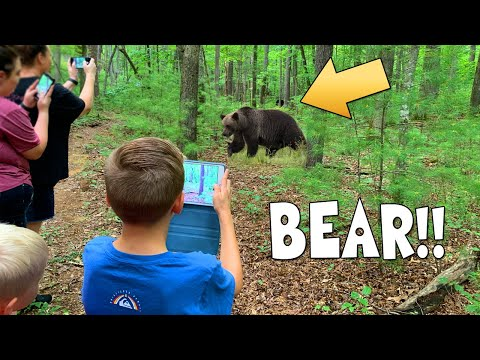 Black Bear with Cubs Encounter in Tennessee!!!