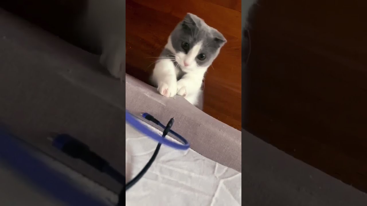 Kitten Loves To Fight Cables