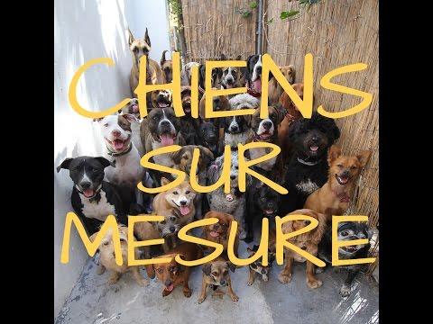 """Résultat de recherche d'images pour """"chiens sur mesure documentaire"""""""