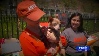 Animal cruelty mobile unit unveiled by NYPD, ASPCA