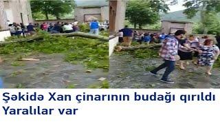 Şəkidə Xan çinarının Budağı Qırıldı - Yaralılar Var