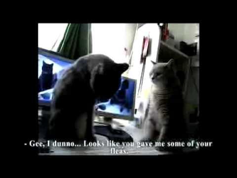 Backe Backe Kuchen Katzen Youtube