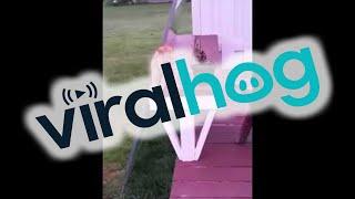 Cat Sits Like A Human || ViralHog thumbnail