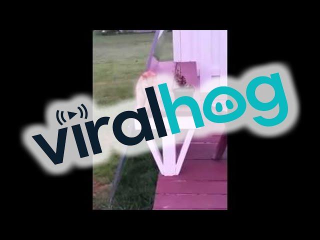 Cat Sits Like A Human