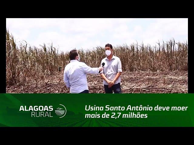 Usina Santo Antônio deve moer mais de 2,7 milhões de toneladas de cana-de-açúcar
