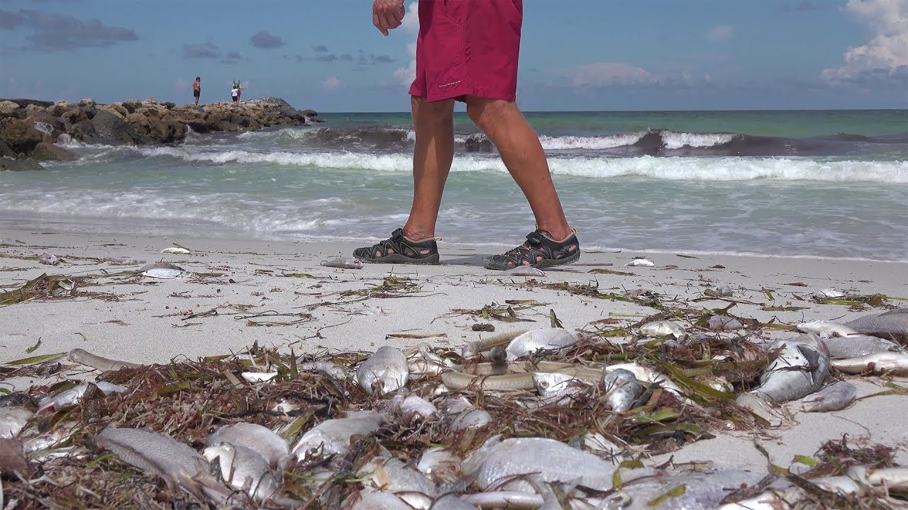Sarasota County Florida Red Tide Outbreak 2018