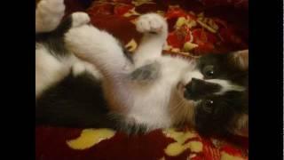 Котята (Возьмите котят БЕСПЛАТНО!!!)