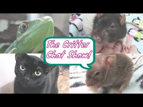 My Pets Are TALKING! (THE CRITTER CHAT SHOW EP.1)