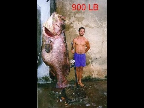 World 39 s biggest saltwater fish youtube for Largest saltwater fish