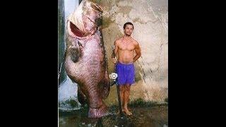 World's Biggest Saltwater Fish