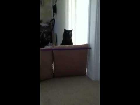 My cat jumping high