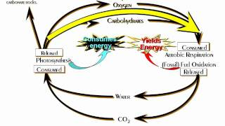 The Carbon Cycle  - The Primary Biogeochemical Cycle