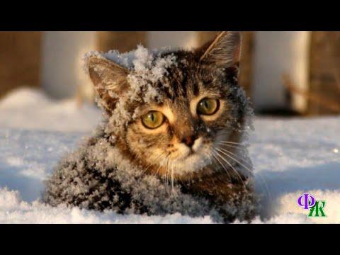 Холод сковывал КОШКУ, она закрыла глаза и уронила мордочку в рыхлый снег, утопив её по самые брови